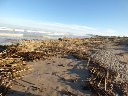 beachcleanersneededgandiapoststorm