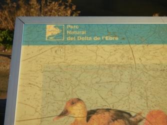 deltadelebre