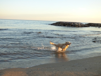 lovinthismedswimmingbiz