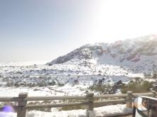 snowytorre