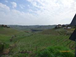 VinesEverywhereBarbaresco
