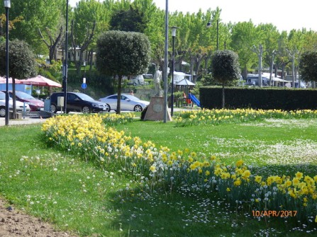 AHostOfGolden(And White)DaffodilsPacengo