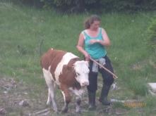 CowWalker!Trentino