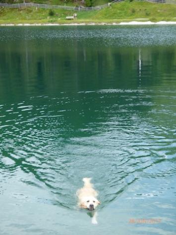 I'llSwimAnywhere!Seefeld