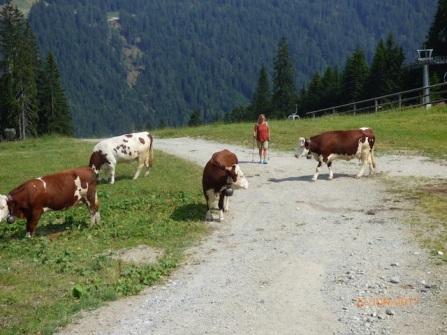 WalkingAmongstTheCattle.Trentino
