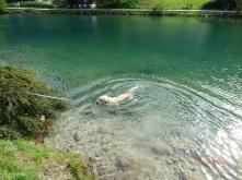 FinallyGetACoolingSwim.Konigssee