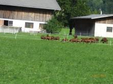 FirstMountainGoatsWe'veSeenForAWhile.Schwaz
